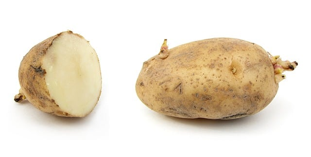 Chinese Scientists Prevent Potato Sprouting with Hydrophobic