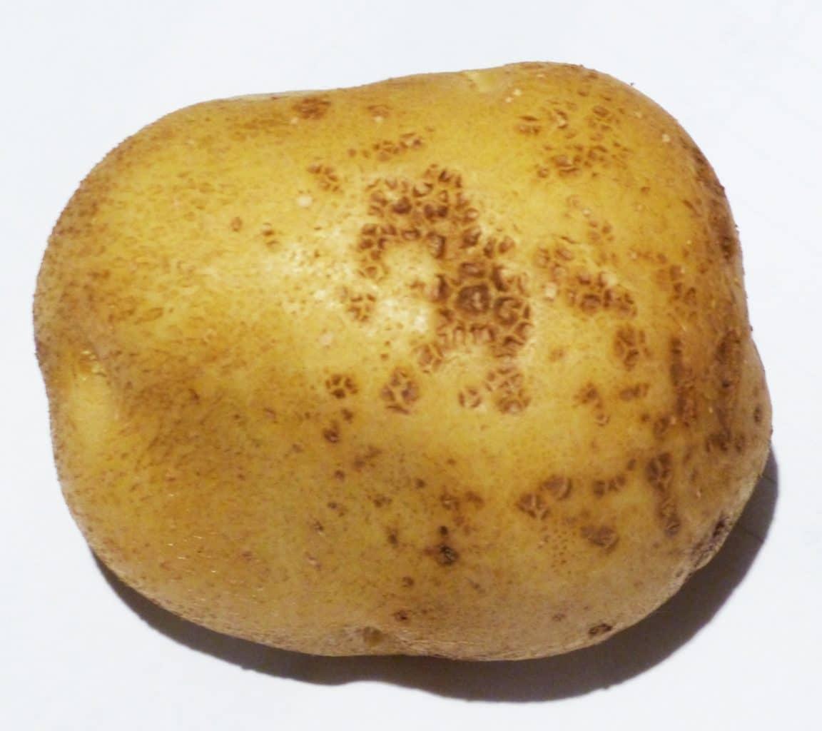 Ontario Potato Production Update: Sept  3, 2019 - Spud Smart