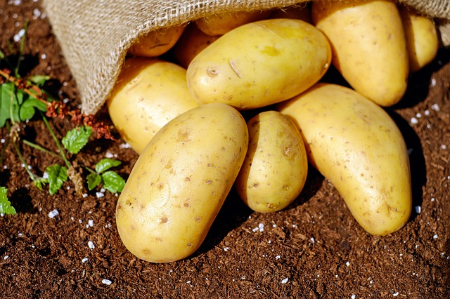Potatoes spill out of a bag onto soil