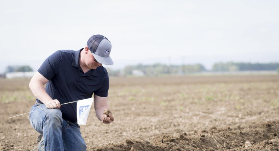Potato field fertilized with Yara products