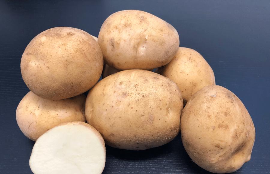 Alliston potato variety