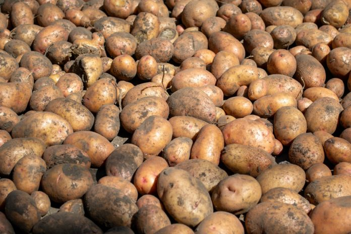 Pile of potatoes