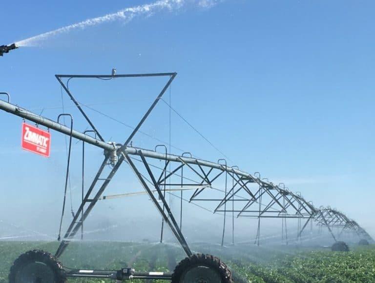 Irrigating potatoes in Saskatchewan