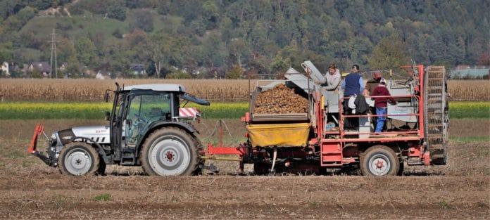 Workers on a potato farm