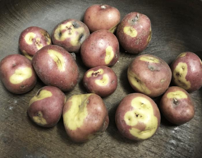 Peruanita potatoes
