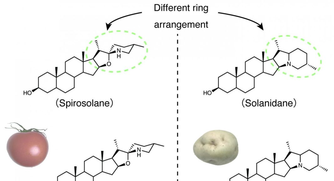 Chemical structures of SGAs in tomatoes and potatoes