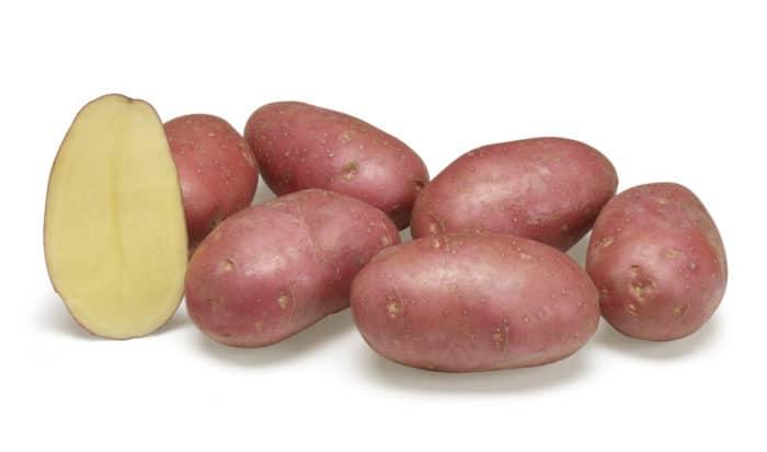 Alouette potato variety