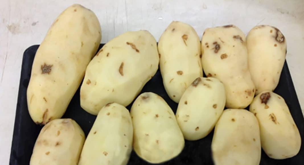 1,4-DMN treated Russet Burbank potatoes
