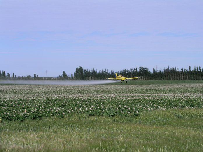 Potato field being sprayed