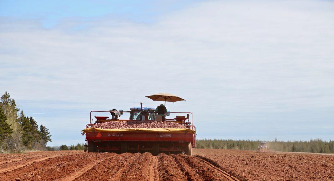 Farmboys Inc. potato planting