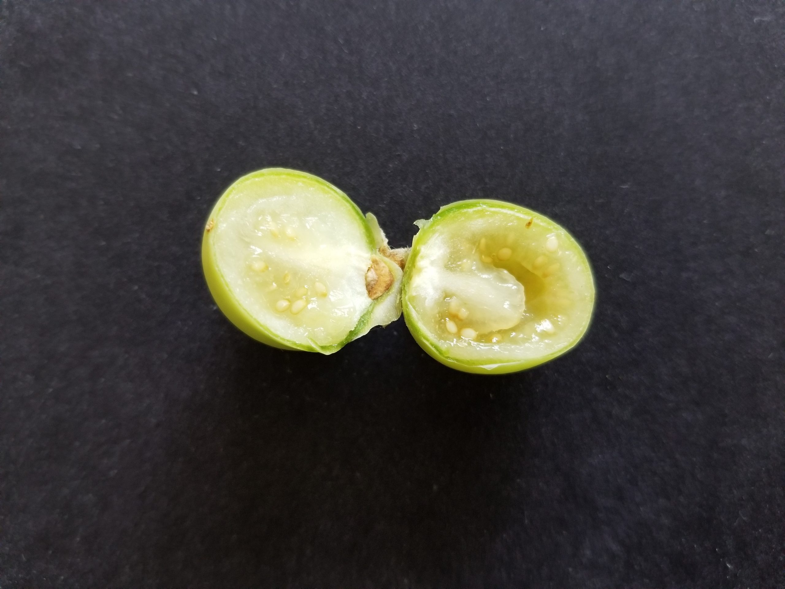 True potato seed ball cut open